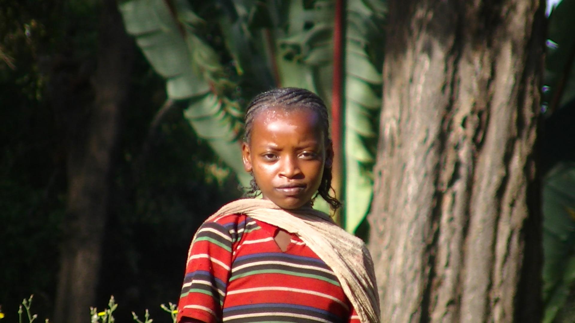 エチオピアコーヒーの今 その3 ECX制度(エチオプア商品取引所)の功罪_a0143042_10354177.jpg