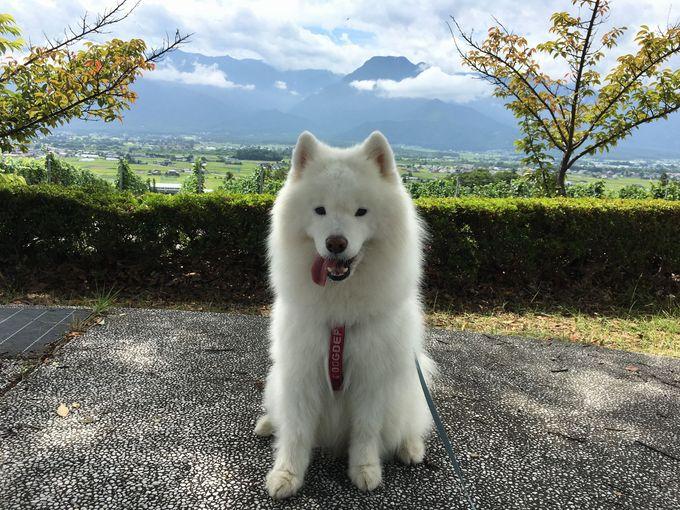 んまいもんシリーズ2017年夏 長野~岐阜旅行編_f0128542_2364729.jpg