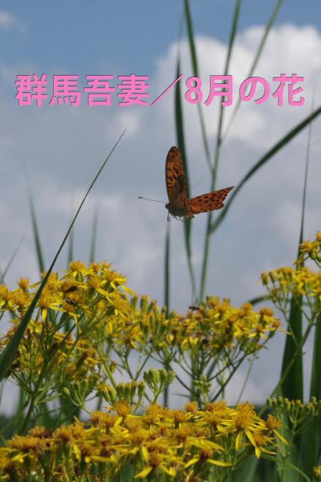 b0144049_13495864.jpg