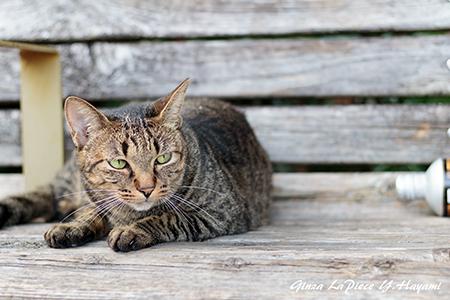 猫のいる風景 近所のキジトラちゃん_b0133053_01534929.jpg