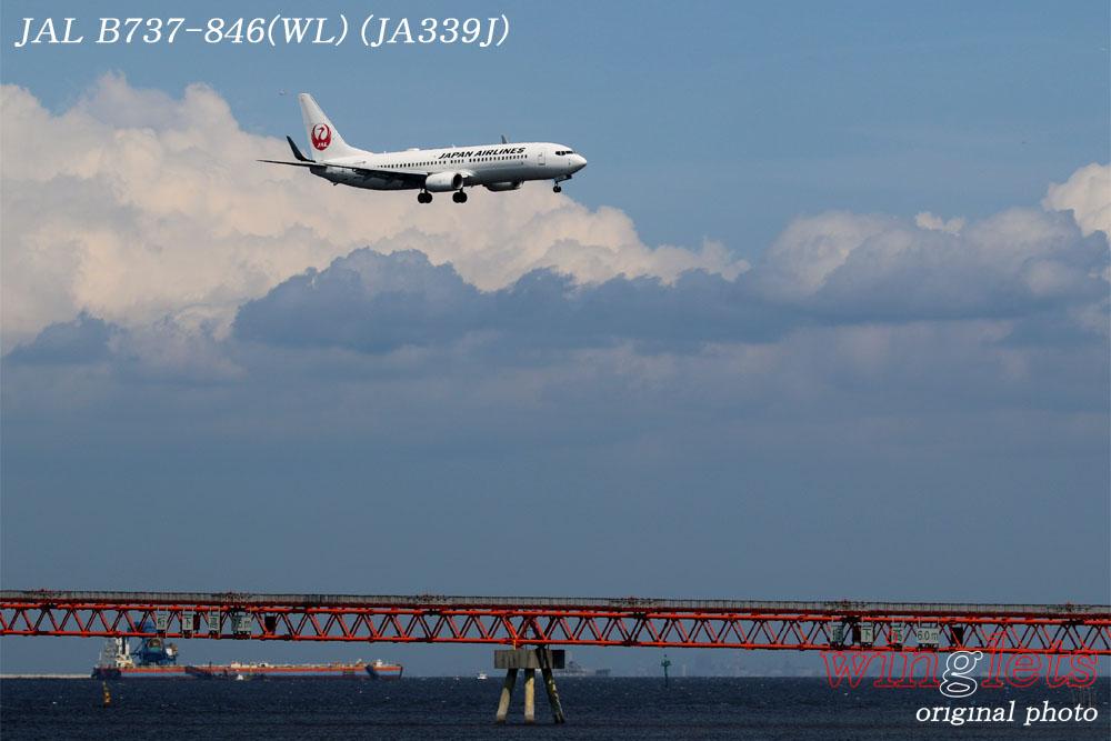 '17年 京浜島・つばさ公園レポート ・・・JAL/JA339J_f0352866_2028376.jpg