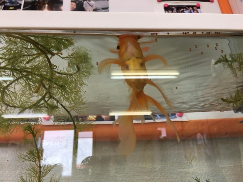 8月30日(水)☆TOMMYアウトレット☆あゆブログ(*´∇`)ノ ラパンK様納車♪ 100万円以下専門店☆_b0127002_16402869.jpg