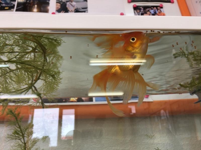 8月30日(水)☆TOMMYアウトレット☆あゆブログ(*´∇`)ノ ラパンK様納車♪ 100万円以下専門店☆_b0127002_16410715.jpg