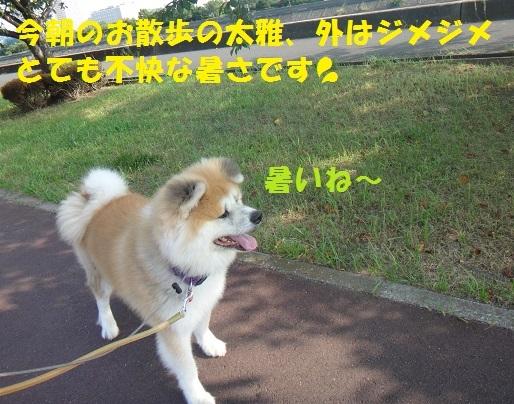 f0121712_15413002.jpg