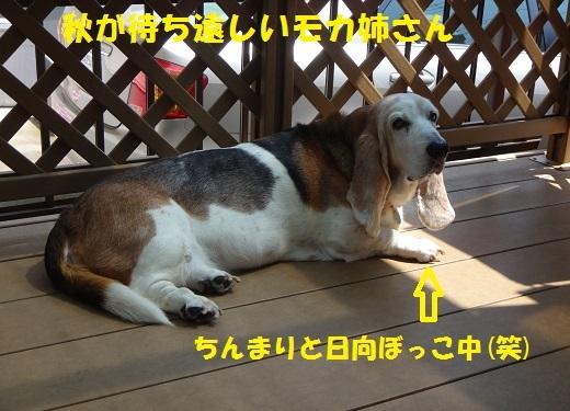 f0121712_16080704.jpg