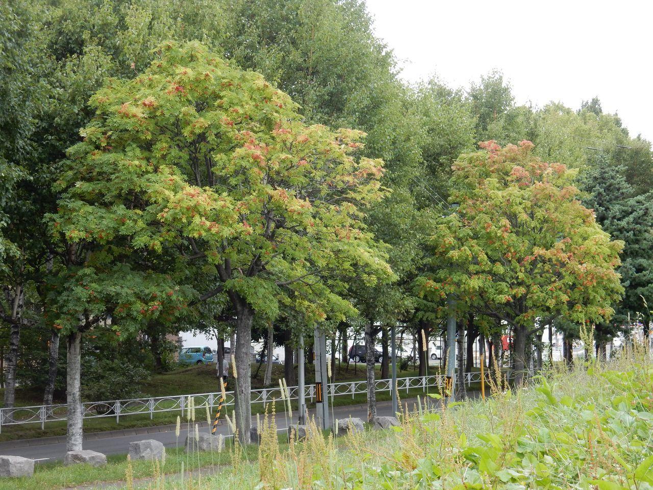 予報がはずれて本格的な秋っぽさが_c0025115_22103418.jpg