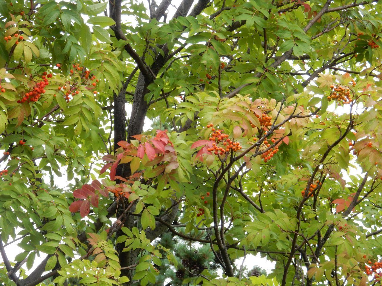 予報がはずれて本格的な秋っぽさが_c0025115_22104180.jpg