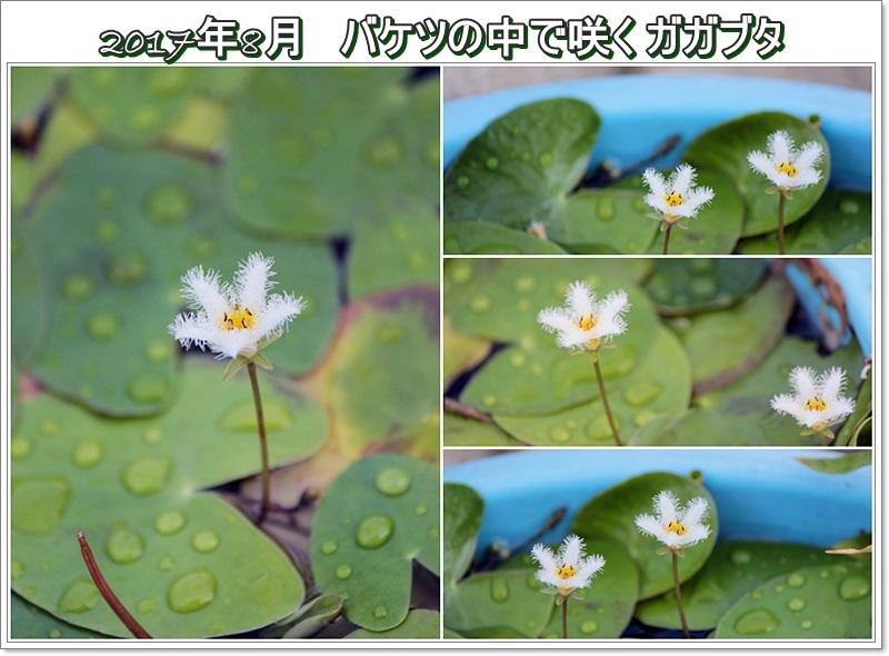f0104569_15033004.jpg