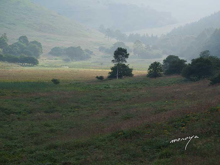 朝の湿原_c0085877_5502161.jpg