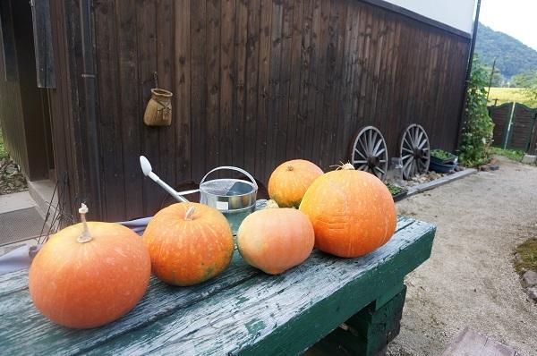 ジャイアントかぼちゃ_e0365880_19234898.jpg