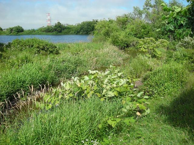運河跡記念碑と岡崎文吉_f0078286_11261960.jpg