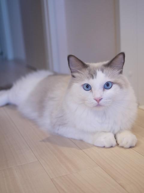 猫のお留守番 小石丸くん編。_a0143140_21473050.jpg