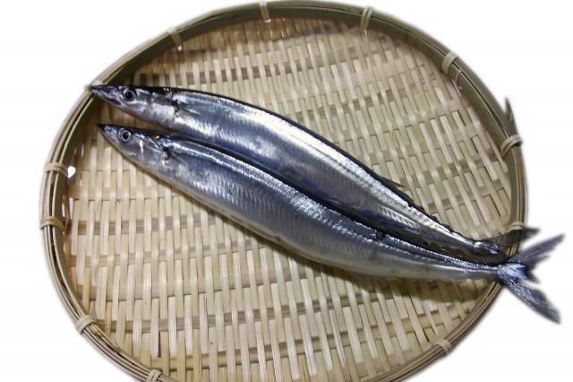 魚_c0343664_16080131.jpg