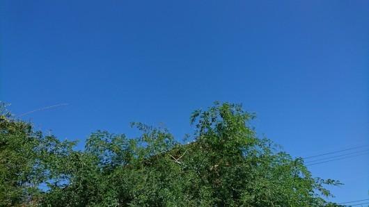 blue・blue・blue_d0362666_09221327.jpg