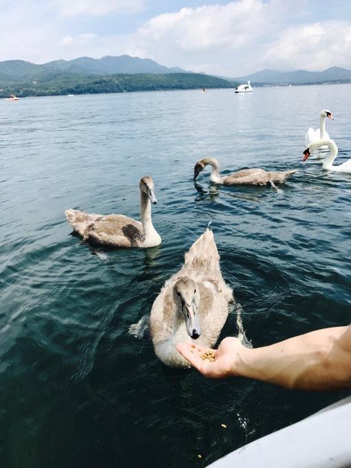 in 山中湖 _b0167282_16560730.jpg