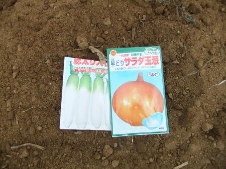 秋冬野菜のスタート_b0137932_22291045.jpg