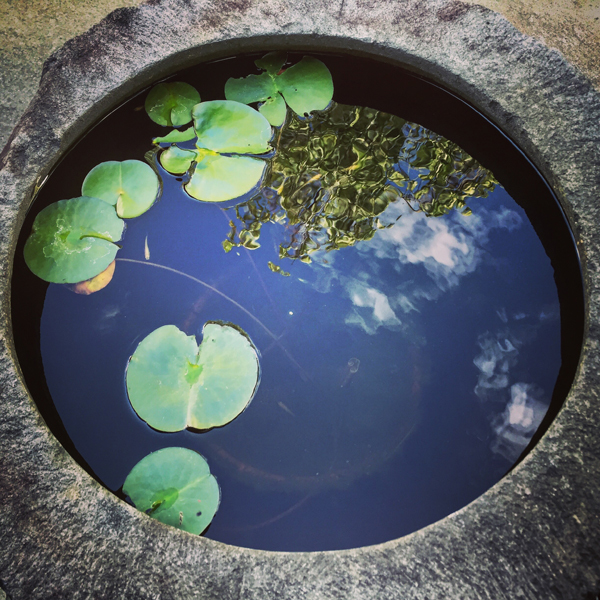 諏訪市元町 / iPhone 6_c0334533_11394752.jpg