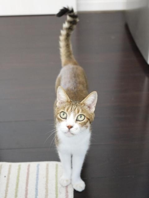 猫のお留守番 ウィンクくん編。_a0143140_22024805.jpg