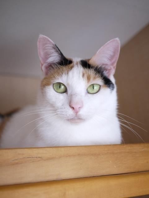 猫のお留守番 エンジェルちゃん編。_a0143140_22190644.jpg
