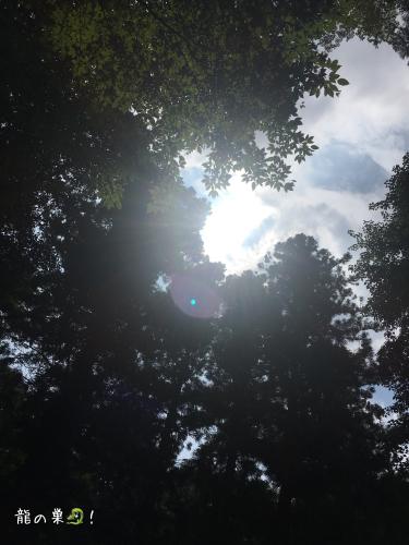 夏エトセトラ。_f0223361_17513480.jpg