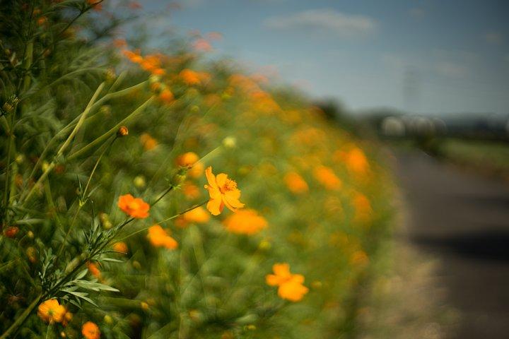 夏から秋へ移ろいゆく田園_d0353489_22192846.jpg