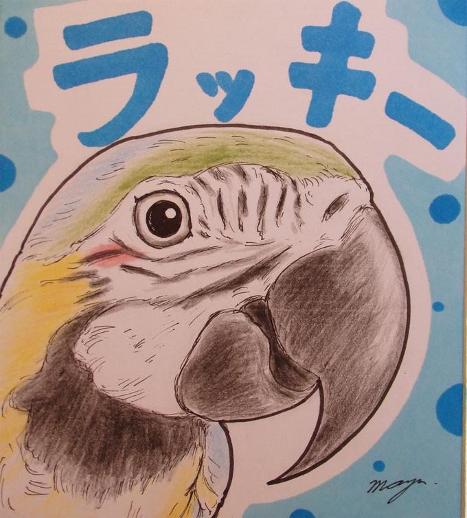 東急ハンズ梅田店『インコと鳥の雑貨展』オーダー会_d0322493_147559.jpg