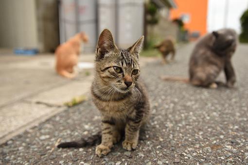 灯台猫たち2017.08.31_b0259218_00395854.jpg