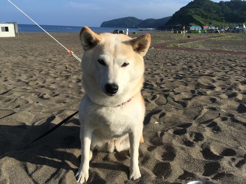 夏の思い出、8月のキャンプin浜益_e0227023_17353631.jpg