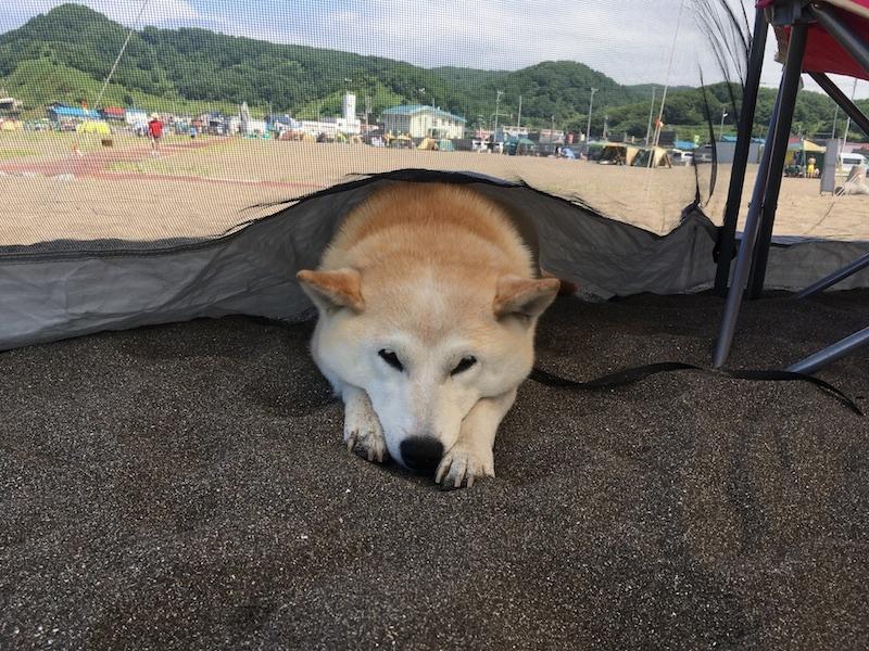 夏の思い出、8月のキャンプin浜益_e0227023_17354254.jpg