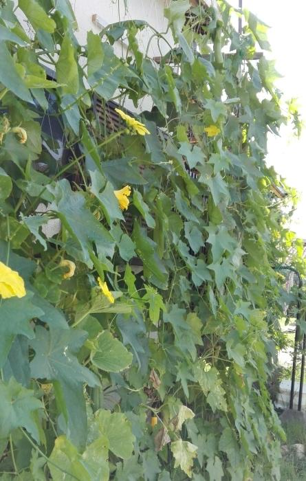 庭のいろいろ_e0155231_10595696.jpg