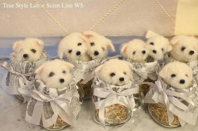 羊毛フェルトWS「マルチーズの子犬」レポート2_c0099133_18413042.jpg
