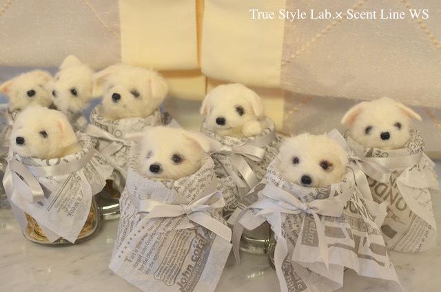 羊毛フェルトWS「マルチーズの子犬」レポート2_c0099133_18421009.jpg