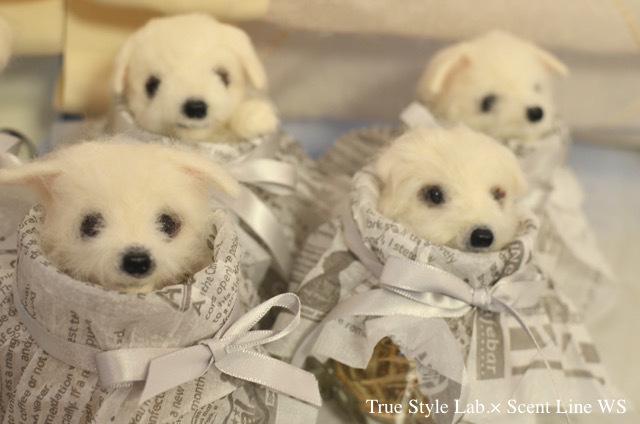 羊毛フェルトWS「マルチーズの子犬」レポート2_c0099133_18430699.jpg