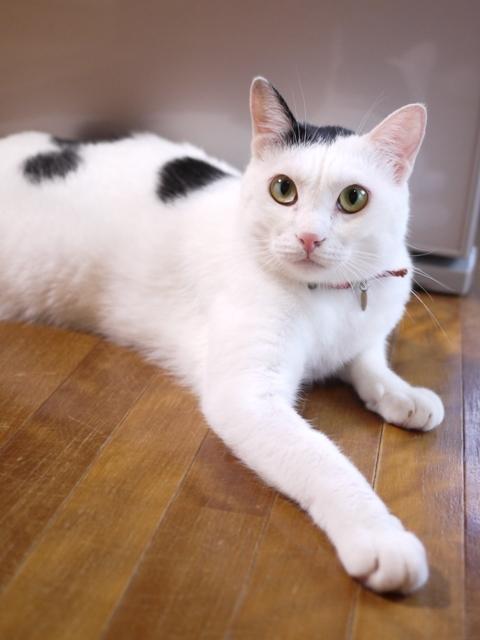 猫のお留守番 たらくん編。_a0143140_22201479.jpg