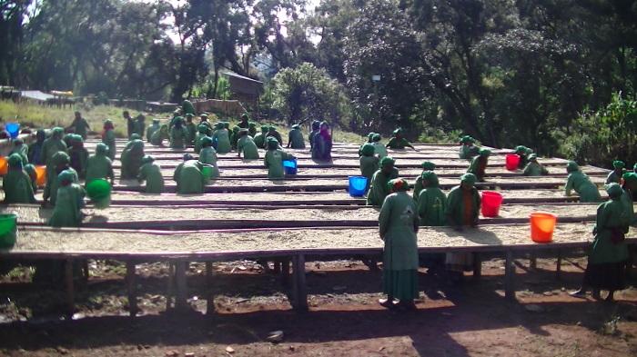 エチオピアコーヒーの今 その6 METAD社ってどんな会社_a0143042_13140569.jpg