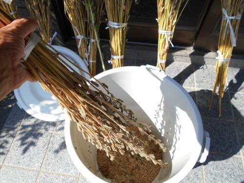 ごまの収穫    その2_e0181260_22123346.jpg