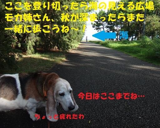 f0121712_08145820.jpg