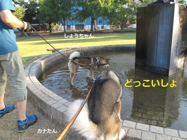 f0143123_09193496.jpg