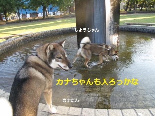f0143123_09194324.jpg
