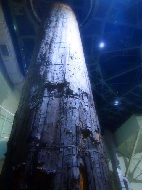「三瓶小豆原埋没林公園」は原始の森だった!(追記)_d0295818_01012615.jpg