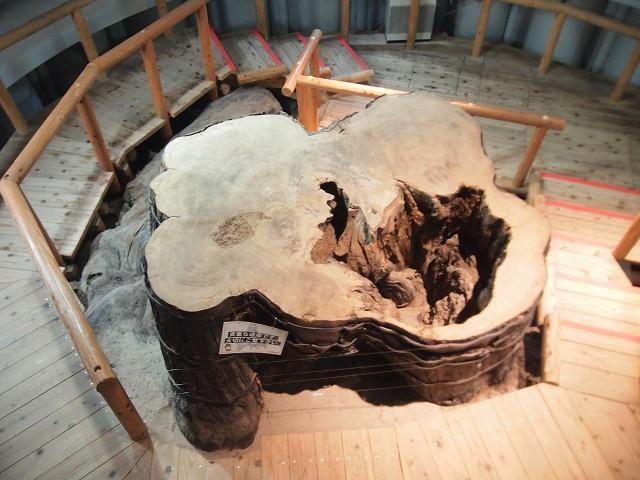 「三瓶小豆原埋没林公園」は原始の森だった!(追記)_d0295818_01155687.jpg