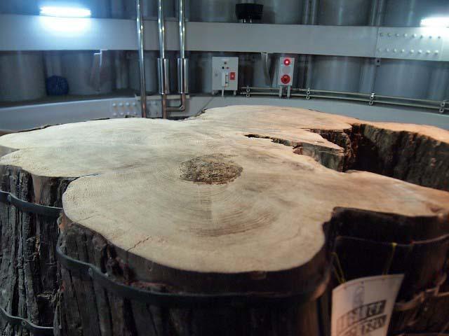 「三瓶小豆原埋没林公園」は原始の森だった!(追記)_d0295818_01230636.jpg