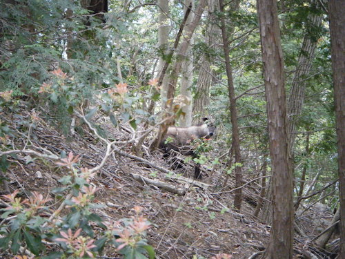 雷鳥日記3〜山岳会の形〜_b0133032_01074311.jpg