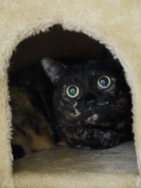 猫のお留守番 クゥちゃん編。_a0143140_00410190.jpg