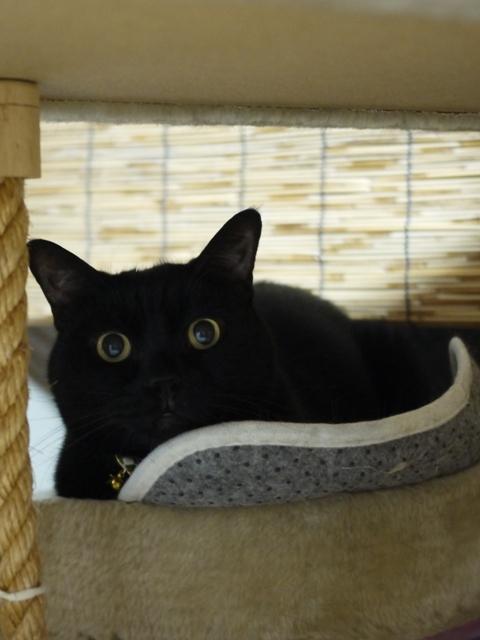 猫のお留守番 デコくん編。_a0143140_00454161.jpg