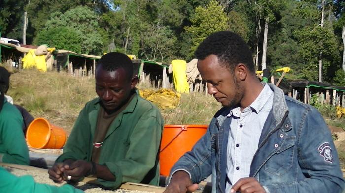 浅野さんのモカ その8 エチオピアコーヒーの新たなビジョン_a0143042_12295876.jpg