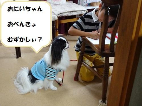 ピアノ教室☆通信☆「満足脳」_d0165645_17142720.jpg