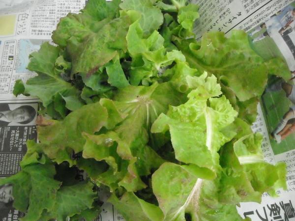 調理実習・農作業 9月_a0115956_12244012.jpg