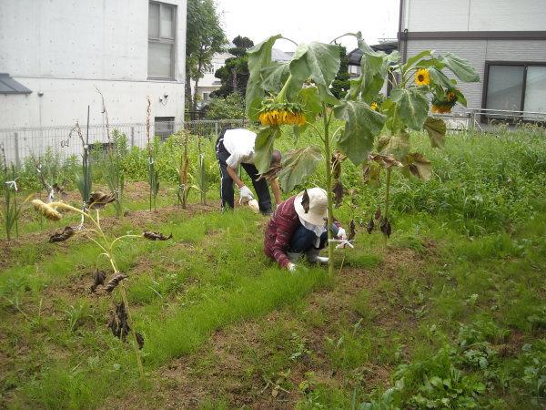 調理実習・農作業 9月_a0115956_14383713.jpg