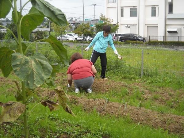 調理実習・農作業 9月_a0115956_14385706.jpg